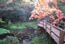 遊歩道(木製八ツ橋)